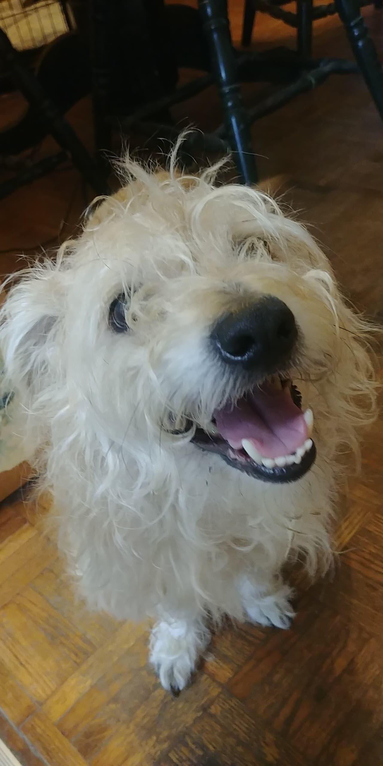 <UL> Adoption Pending <LI> Junior <LI> Border Terrier mix  <LI> Sex: M <LI> Age: 6 yrs <LI> Fee: $22
