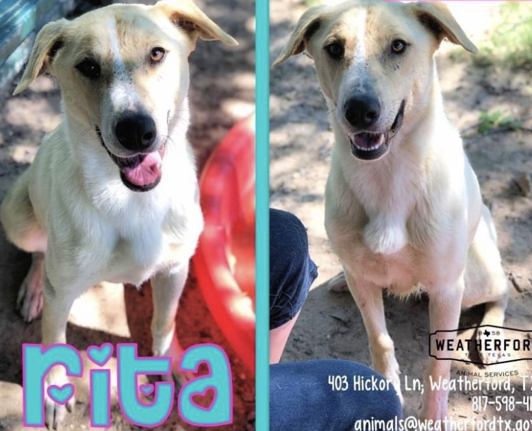 <UL> Rita <LI> Shepherd mix <LI> Sex: F <LI> Age: 1-2 yrs <LI> Fee: $250